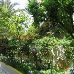 The gardens of Aris Hotel