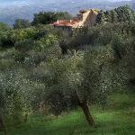 Sarete in mezzo agli olivi