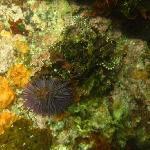 Lots of sealife underwater