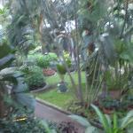 View from Bulgari Garden Suite Room