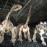 Dino stampede
