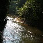 Stream splitting the coffee and tea plantations