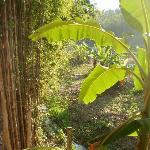 view from the bungalow window, sun filtering through the bananal tree leaves