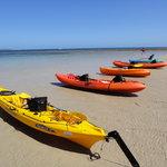 Cruising Kangaroo Island Kayak Tours