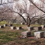 梅と養蜂の箱