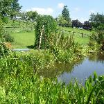 The beautiful pond