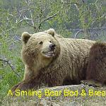 A Smiling Bear