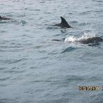 balade avec les dauphins