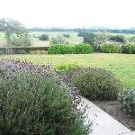 Lavender @ Longview Garden