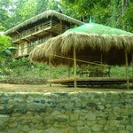 Treetops sala and house