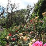 Gorgeous front garden