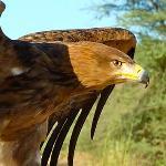 Birds of Prey Flying
