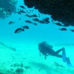Diver silhouette