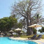 Piscine, baobab et ocean indien
