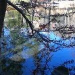 ducks on pond behind cabin