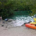 Lagoon side of cenote - amazing!