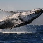 Whale watching is one of the most impressive activities in nature you can participate in.