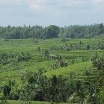 Vie of the Jatiluwih rice field