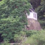 Curiosité : Chapelle sur un arbre