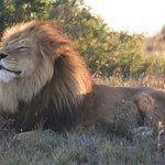 Φωτογραφία: Amakhala Safari Lodge