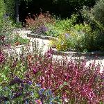 Butterfly Garden in Summer