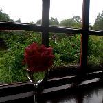 Window to my Westport world