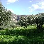 Einer von unzähligen Olivengärten