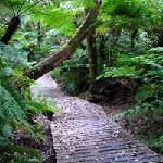 Stunning Forest Walks, biking trails