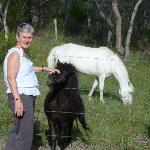 Lorraine and the friendly ponies