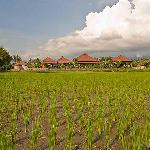 View from the ricefields