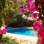 Le jardin, les bougainvillèes, la piscine