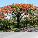 Road to Avarua, Rarotonga,  Cook Islands
