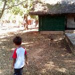 Foto de Bannerghatta Nature Camp