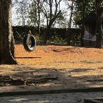 Tire slung from tree and hammock