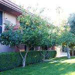 Date Tree Best Western Fruit Trees