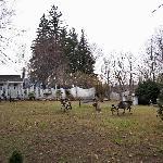 the grounds and backyard