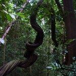 bukit tree