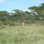 animals during a game drive