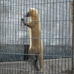 野毛山動物園の写真その1