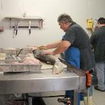 processing shark