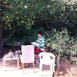 Eating under the orange tree