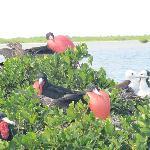 sanctuaire d'oiseaux à Berbuda