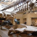 les mammifères du musée