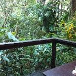 Balcony looking over the rainforest