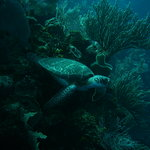 great marine life to see - snorkeling or diving !