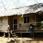A true Jungle Lodge