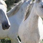 Wonderful wild horses