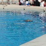 En el delfinario