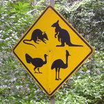 Regenwald-Tiere