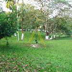 aranya lawn view 2